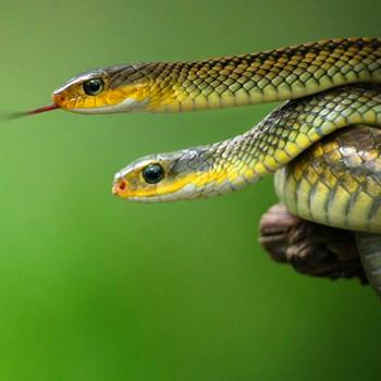 男人梦见蛇是什么预兆,诸事宜守不宜进