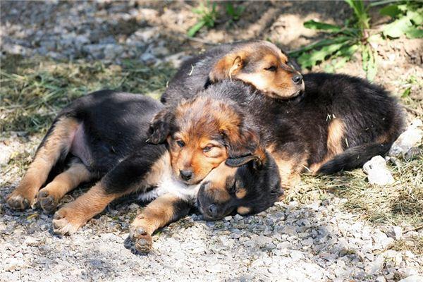 女人梦见狗是什么预兆,你的人际关系会恶化