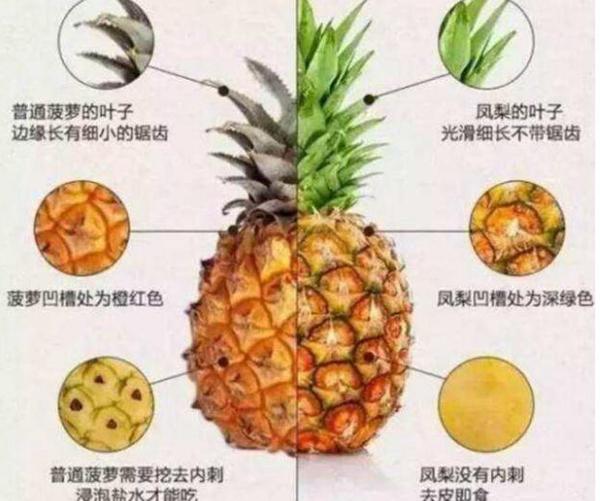 凤梨是不是菠萝?凤梨和菠萝有什么区别